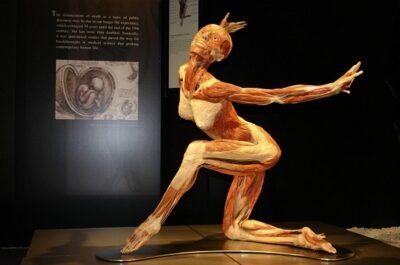 Фото с сайта bodyworlds.moscow